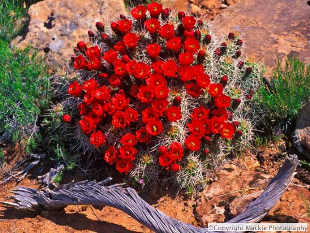 Spring in the Desert brings amazing Wildflowers