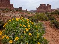 Spring in the Desert brings amazing Wildflowers with astonishing backdrops